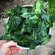 Dehydrated spring greens / spring green chips