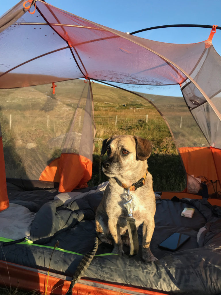 Wild camping Carneddau Snowdonia with my dog Lucky