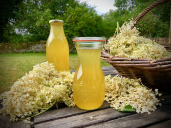 gooseberry and elderflower cordial