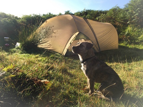 Wild camping with the Lucky dog